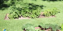 Granada Hills Landscaping & Hot Water Solar 14, SolReliable, CA